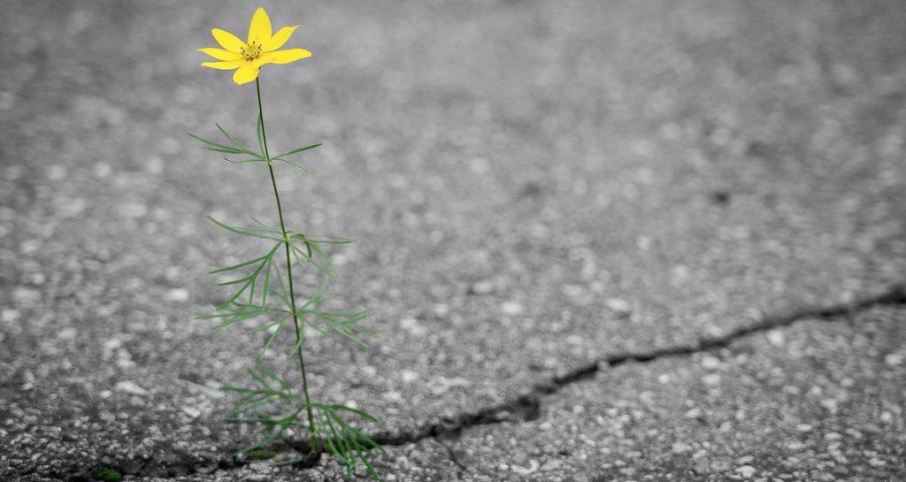 Blume Riss Asphalt Wachstum Krise Chance